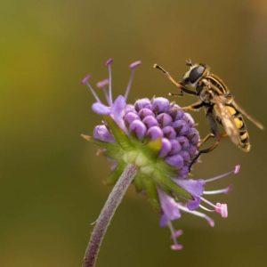 Insectes-comment-entretenir-son-jardin